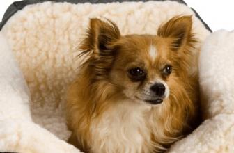 Honden autostoel voor klein en middelgrote honden