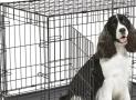 Hondenbench Groot en Klein kopen